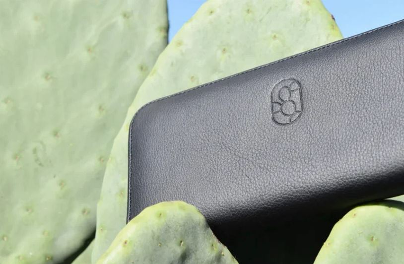 'Leather' made of cactus: inspiration and creativity for sustainability